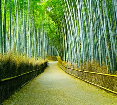 嵐山・竹林の道